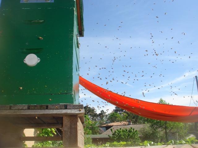 HELP!!!!une ruche sur un toit...........la saga! - Page 4 Mes_za12