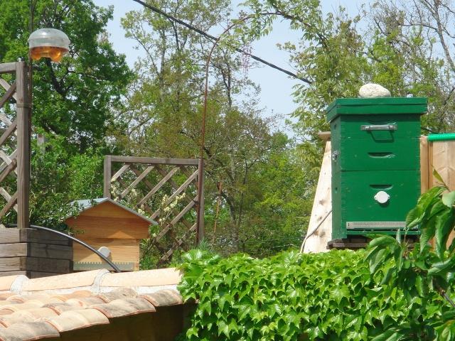 HELP!!!!une ruche sur un toit...........la saga! - Page 3 Potage16