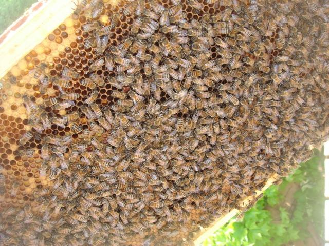 HELP!!!!une ruche sur un toit...........la saga! - Page 3 Premia10