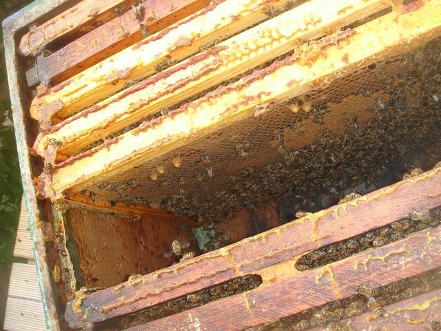 HELP!!!!une ruche sur un toit...........la saga! - Page 3 Premia11