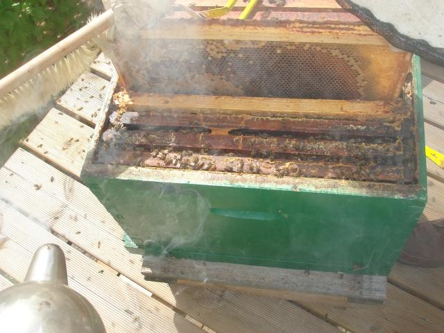 HELP!!!!une ruche sur un toit...........la saga! - Page 3 Premia12