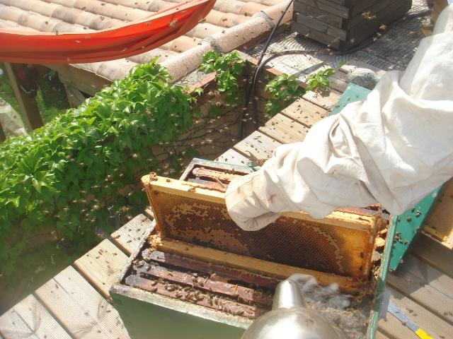 HELP!!!!une ruche sur un toit...........la saga! - Page 3 Premia13