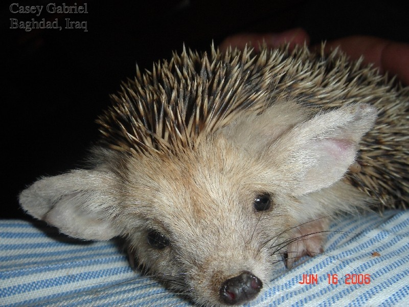 photo!!!!! Hedgeh10