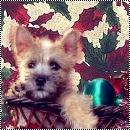 Théme spécial Noël pour Z'aniWeb [admin] New_bm10