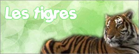 Duel contre moi [amateur] Tigres10