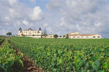 Le vignoble du Pessac Leognan Chatea13