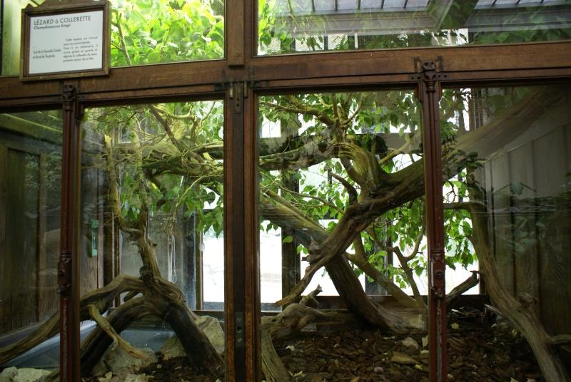 Les terras du museum de Paris Dsc00914