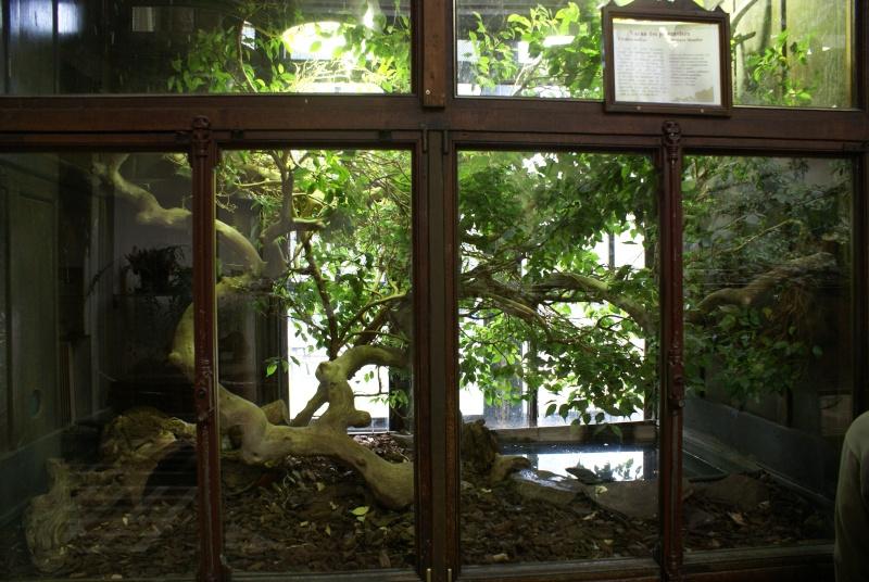 Les terras du museum de Paris Dsc00917