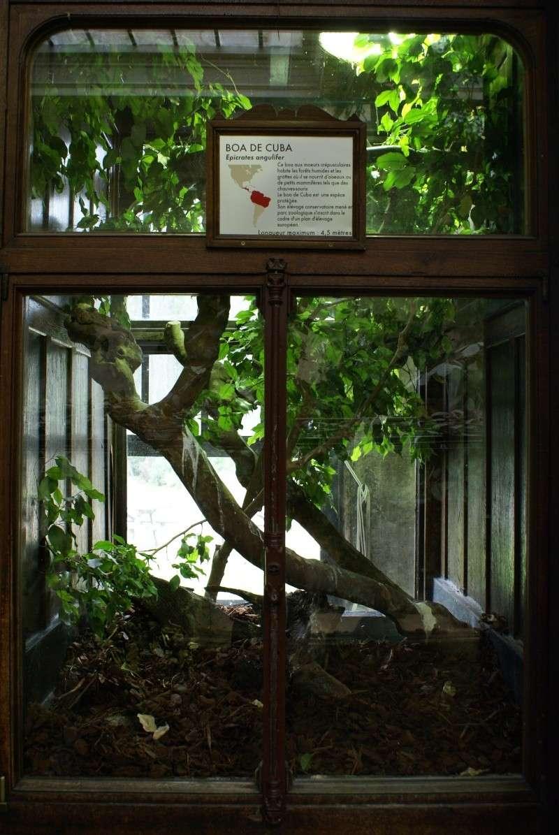 Les terras du museum de Paris Dsc00918
