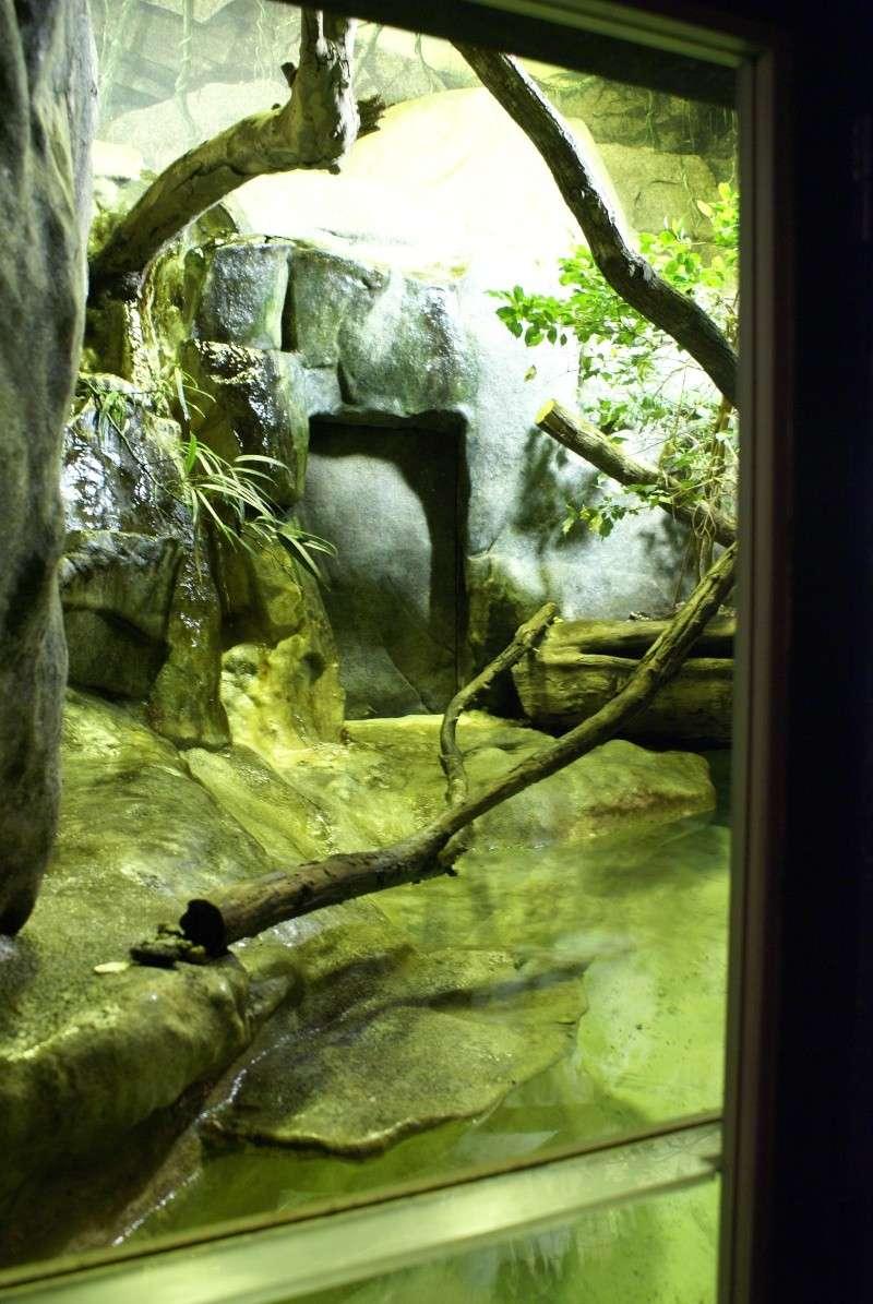 Les terras du museum de Paris Dsc00921
