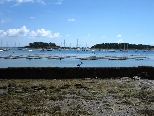 Ibis, parcs à huitres et îles logoden.... Img_5810