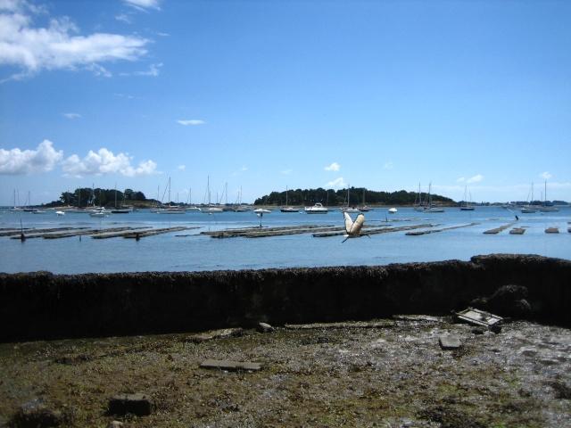 Ibis, parcs à huitres et îles logoden.... Img_5811
