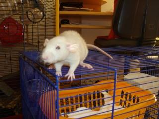 Rats Imgp1511