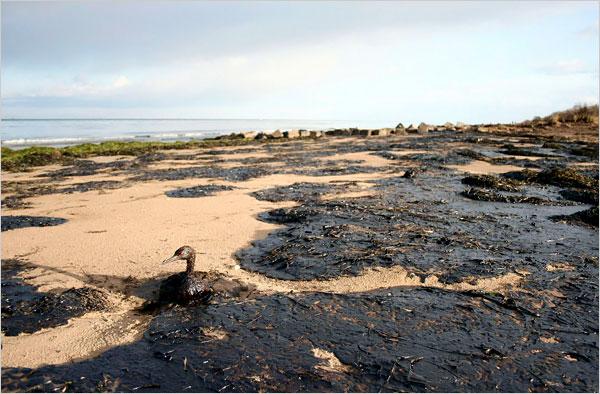 Accidents et tempêtes en mer : les news 20716510