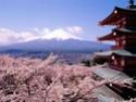 Paysages Japonais Cherry10