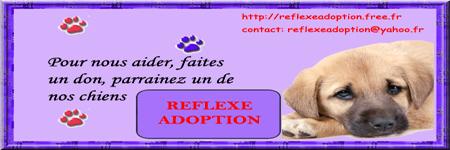Lou 6 mois - a adopter Signat47