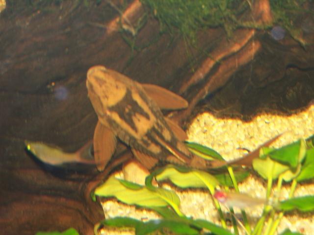 Algues pinceaux Photo_43