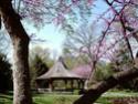 Paysages Japonais 01jard10