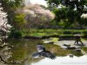 Paysages Japonais Img_1111