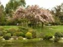 Paysages Japonais Jardin10