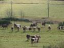 Le temps à Madelonnet du mois de novembre 2007 2007_244