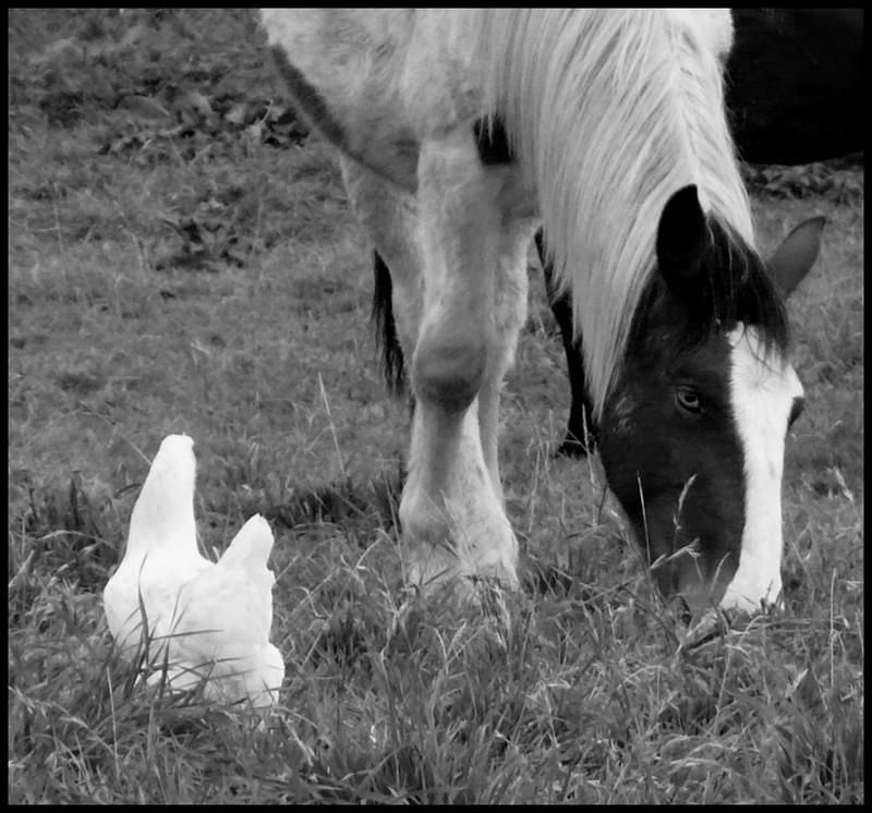 Thème de Juin : Le Mois des Copains (copains non équins et non humains!!!) - Page 2 P1070410