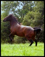 Loona, ma jument varnish roan Prince10