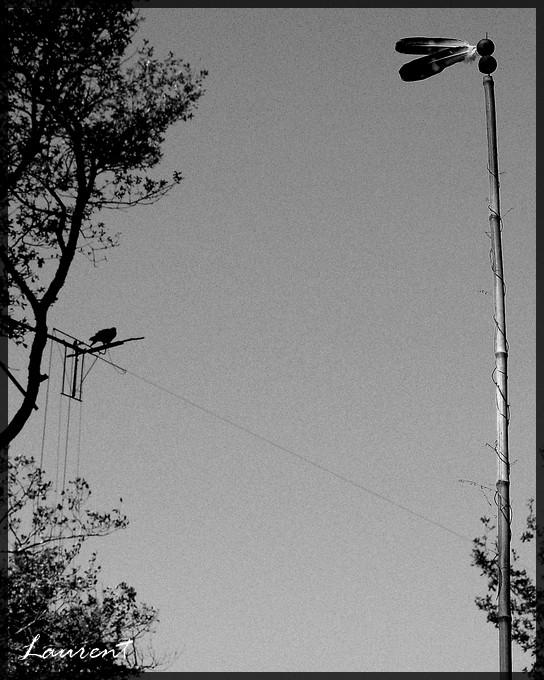 une girouette avec en fond un volant sur fil Eole10