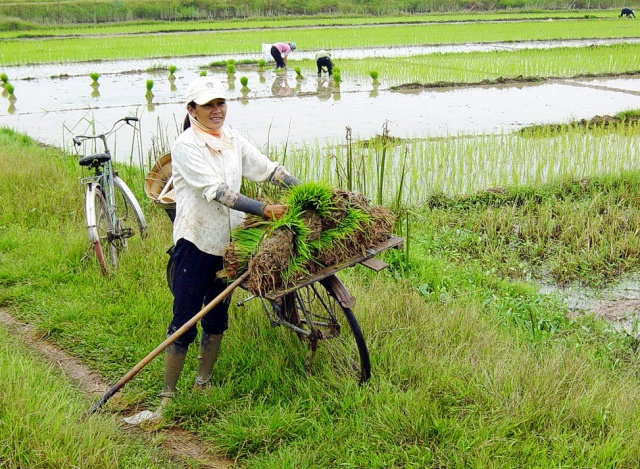 le Viêt Nam 07-1_e10