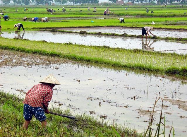 le Viêt Nam 07_env11