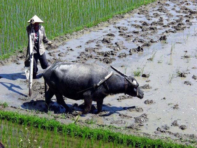 le Viêt Nam 08_env10