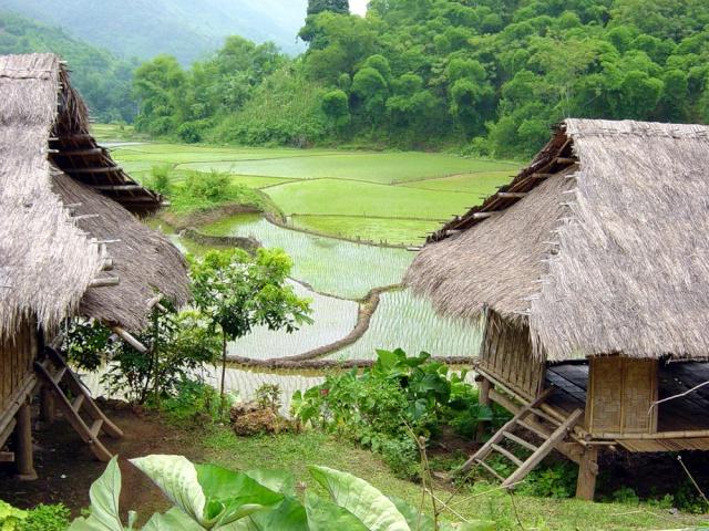 le Viêt Nam 11_hoa10
