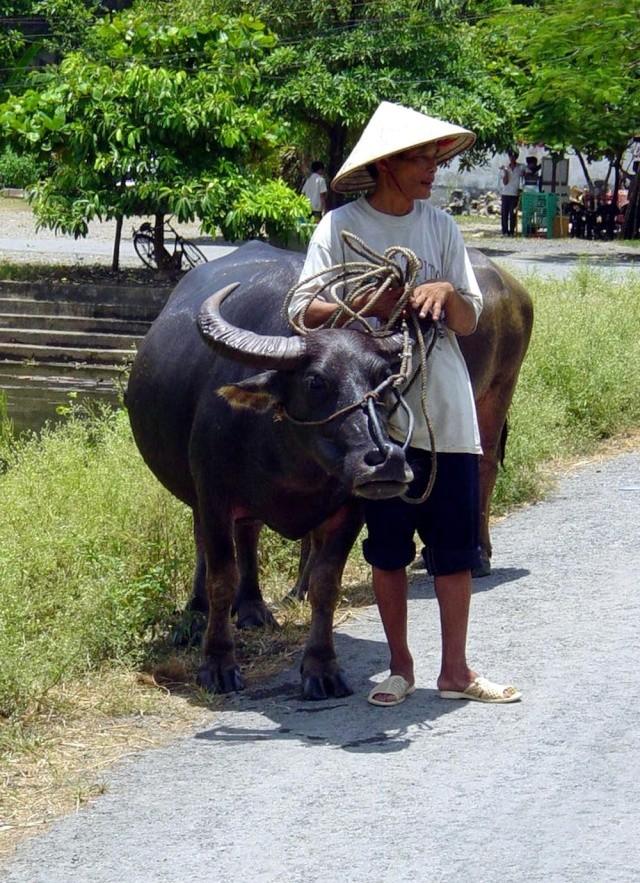 le Viêt Nam 2610