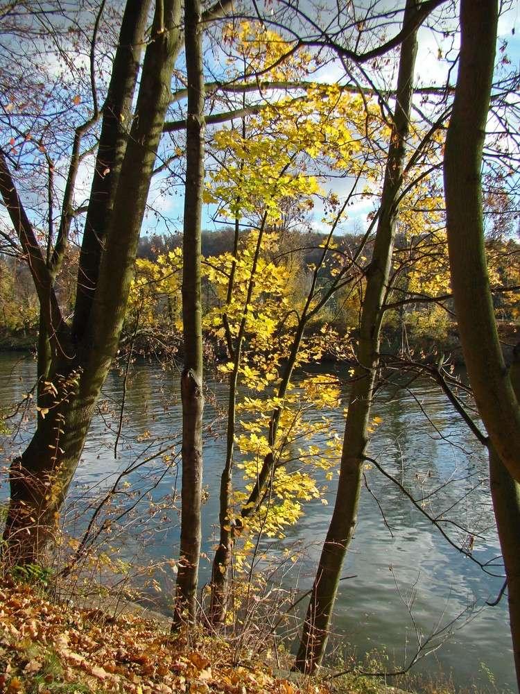 Promenades sur les berges de la Seine Berges11