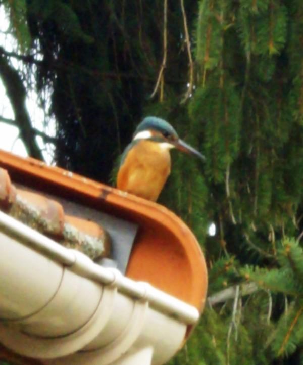 Votre photo pour decembre 2007 - Page 2 Martin11