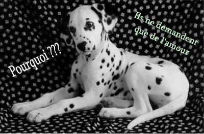 aspa, sos animaux maltraités et abandonnés Pourqo10