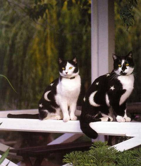 Painted Cats lol Image012