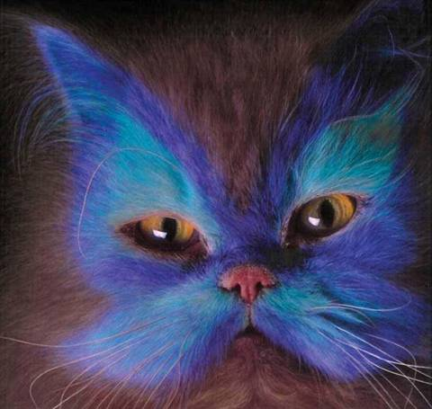 Painted Cats lol Image015