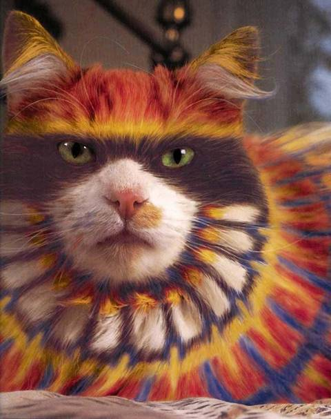 Painted Cats lol Image027