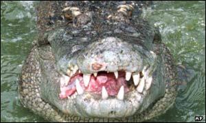 Curiosidades:Gustavo el cocodrilo devora hombres _3853211
