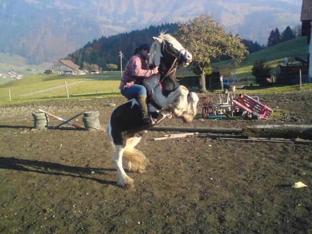 KIERAN et SUNSHINE, en Suisse Dsc00311