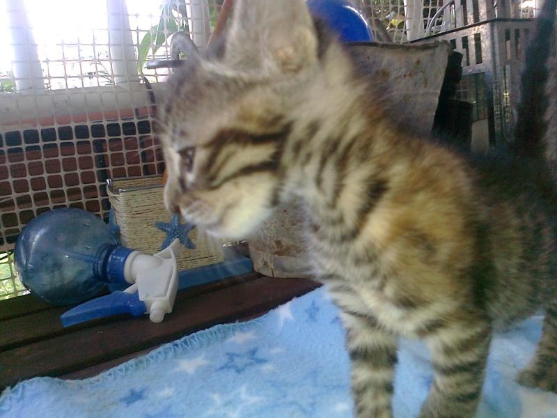 Ζητειται μαμα για τιγρακι!!! - Σελίδα 4 Iiiiii51