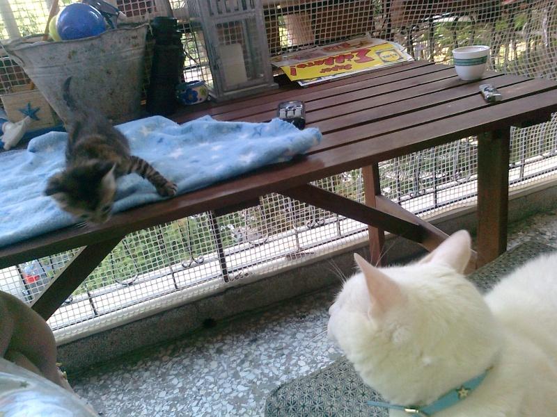 Ζητειται μαμα για τιγρακι!!! - Σελίδα 4 Iiiiii55