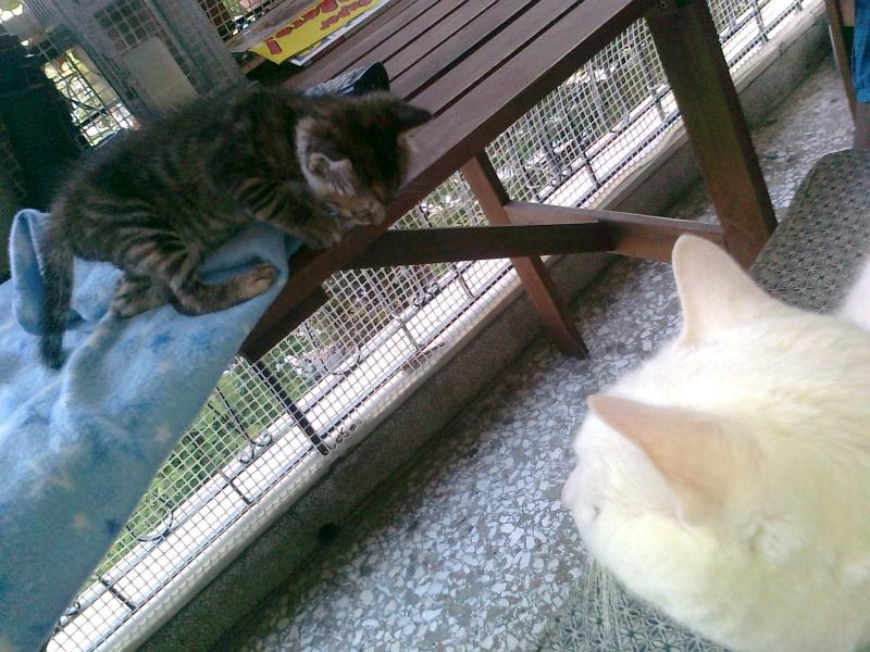 Ζητειται μαμα για τιγρακι!!! - Σελίδα 4 Iiiiii57