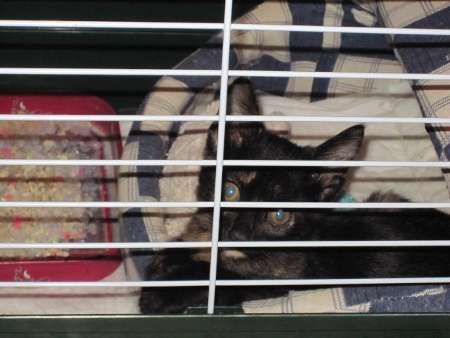 Γατουλα με σπασμενη λεκανη!!!  (Τα γατακια της γειτονισσας...) - Σελίδα 3 Img_0922