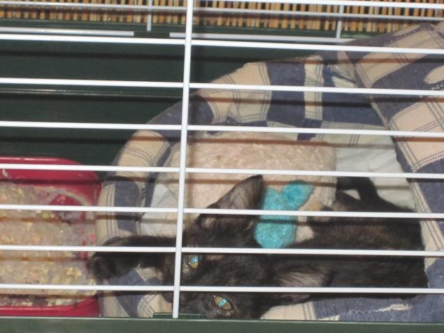 Γατουλα με σπασμενη λεκανη!!!  (Τα γατακια της γειτονισσας...) - Σελίδα 4 Img_0923