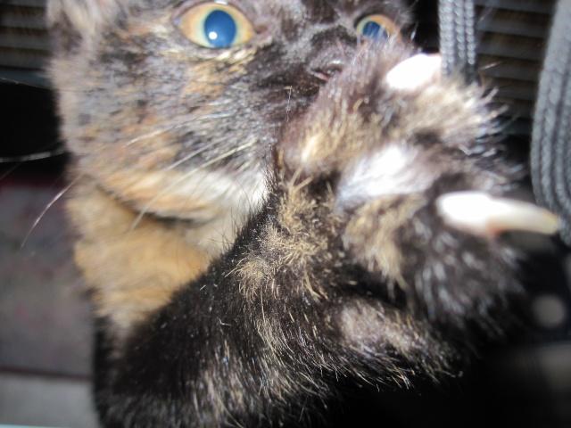Γατουλα με σπασμενη λεκανη!!!  (Τα γατακια της γειτονισσας...) - Σελίδα 4 Img_0925