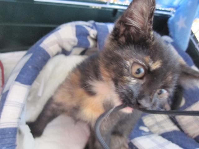 Γατουλα με σπασμενη λεκανη!!!  (Τα γατακια της γειτονισσας...) - Σελίδα 4 Img_0928
