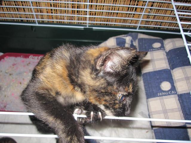 Γατουλα με σπασμενη λεκανη!!!  (Τα γατακια της γειτονισσας...) - Σελίδα 4 Img_0931