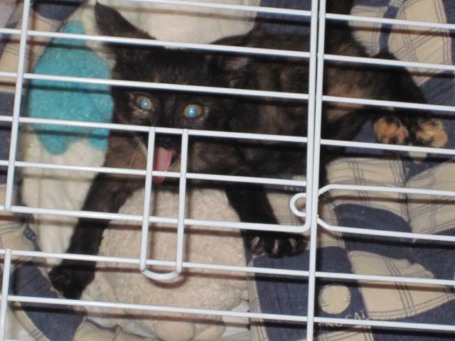 Γατουλα με σπασμενη λεκανη!!!  (Τα γατακια της γειτονισσας...) - Σελίδα 4 Img_0932